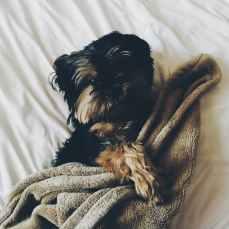Photo by Abby Kihano on Pexels.com