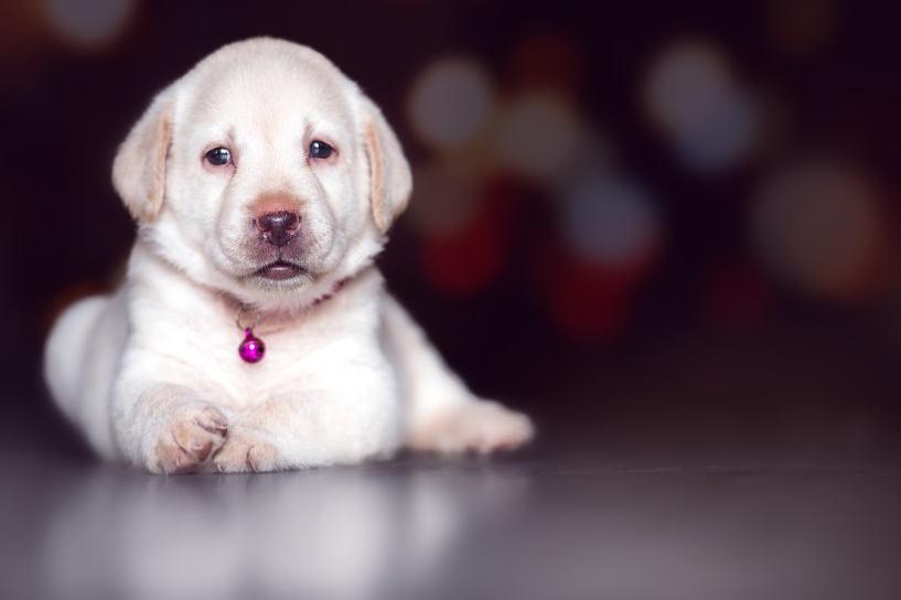Dog Cute Pet Mammal Canine