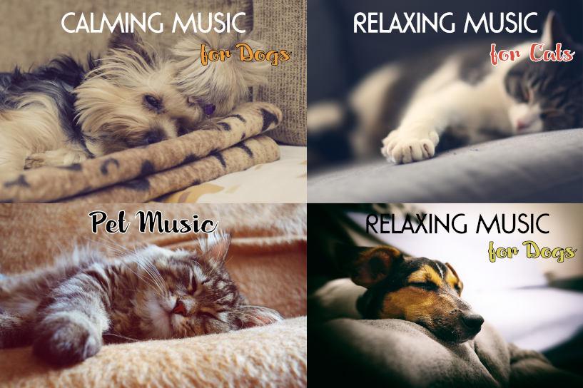 Pet Apple Music Playlist
